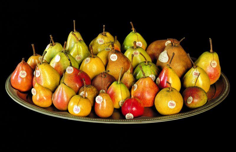 museo frutta torino